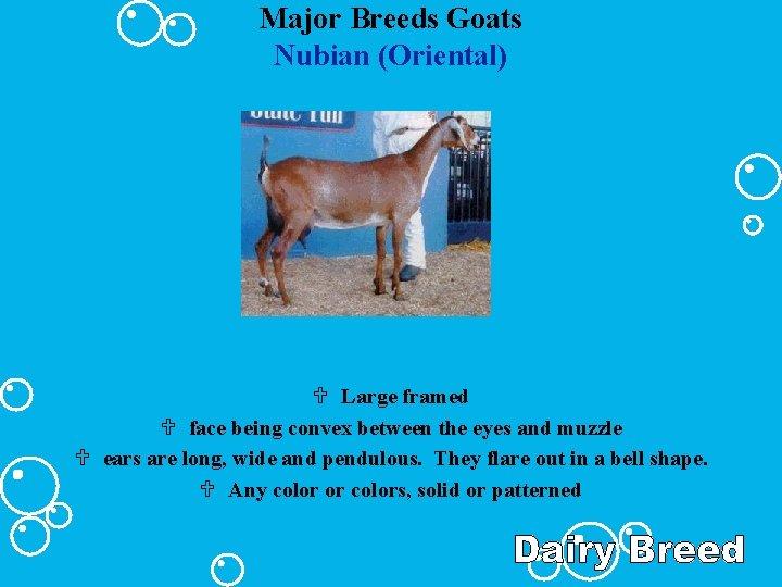 Major Breeds Goats Nubian (Oriental) U Large framed U face being convex between the