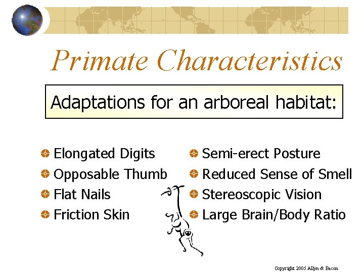 Primate Characteristics Adaptations for an arboreal habitat: Elongated Digits Opposable Thumb Flat Nails Friction