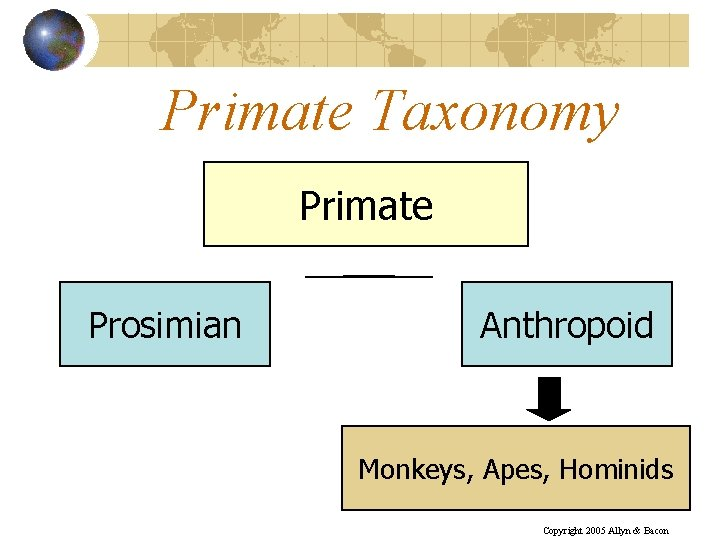 Primate Taxonomy Primate Prosimian Anthropoid Monkeys, Apes, Hominids Copyright 2005 Allyn & Bacon