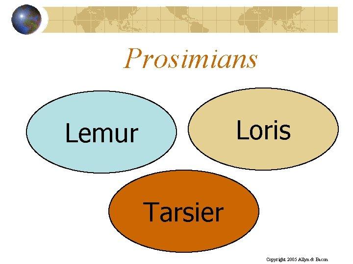 Prosimians Loris Lemur Tarsier Copyright 2005 Allyn & Bacon