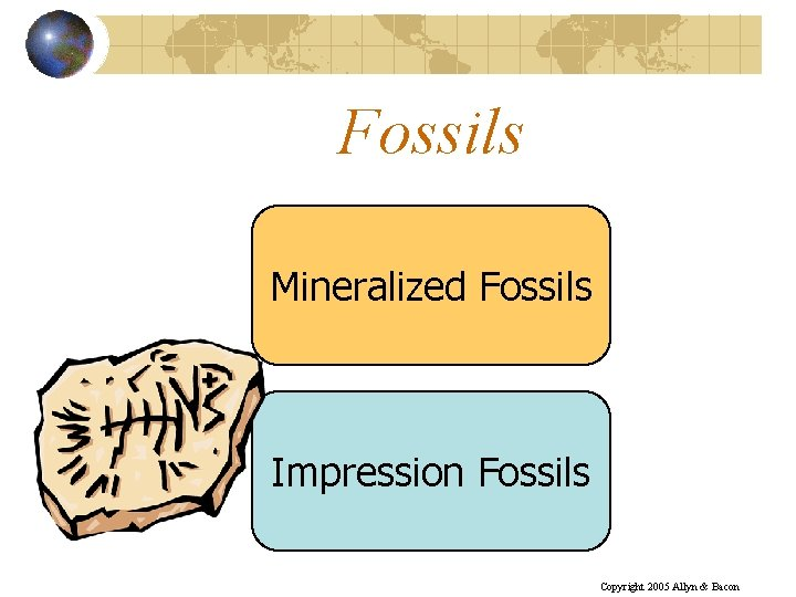 Fossils Mineralized Fossils Impression Fossils Copyright 2005 Allyn & Bacon