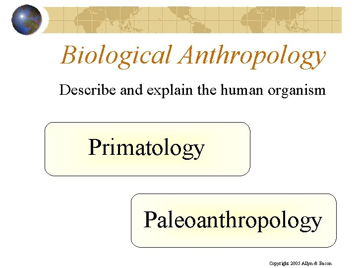 Biological Anthropology Describe and explain the human organism Primatology Paleoanthropology Copyright 2005 Allyn &