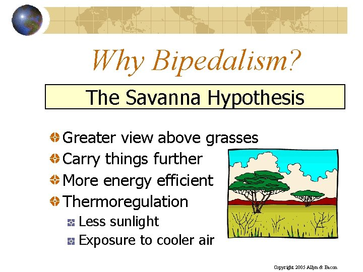Why Bipedalism? The Savanna Hypothesis Greater view above grasses Carry things further More energy