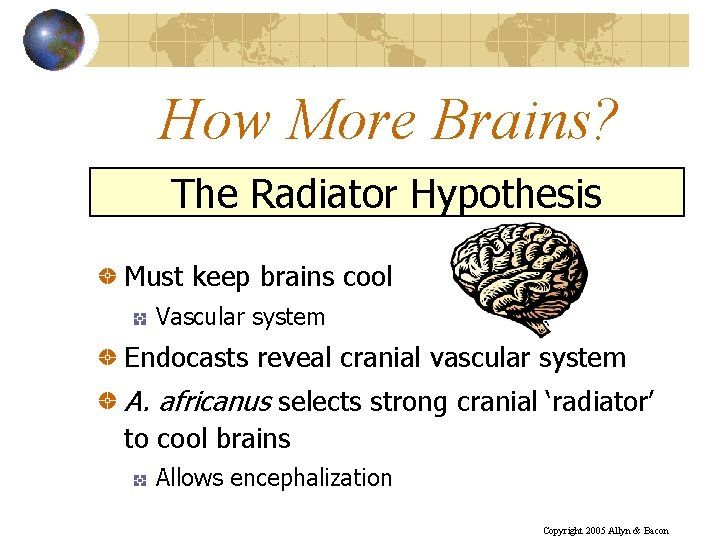 How More Brains? The Radiator Hypothesis Must keep brains cool Vascular system Endocasts reveal