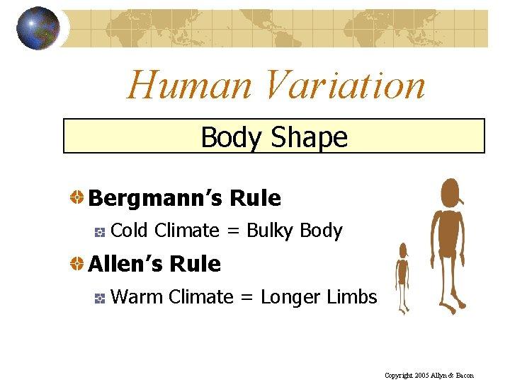 Human Variation Body Shape Bergmann's Rule Cold Climate = Bulky Body Allen's Rule Warm