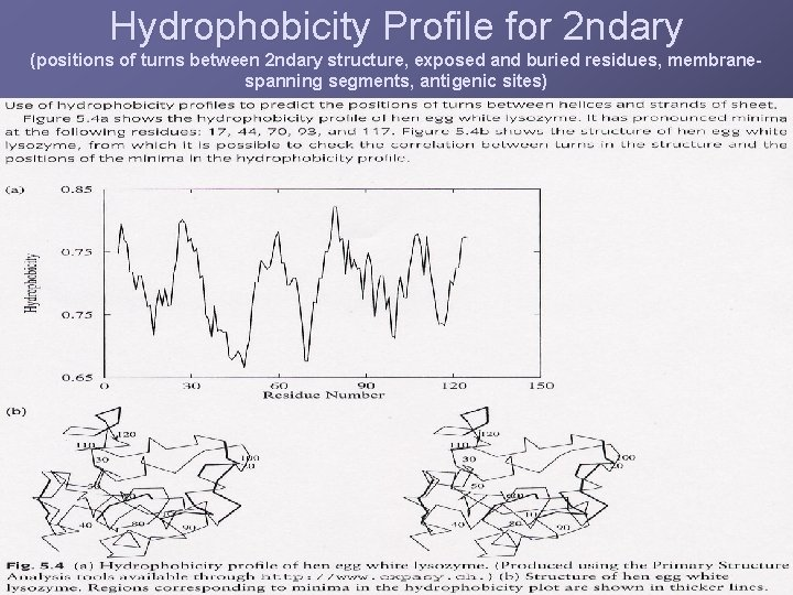 Hydrophobicity Profile for 2 ndary (positions of turns between 2 ndary structure, exposed and