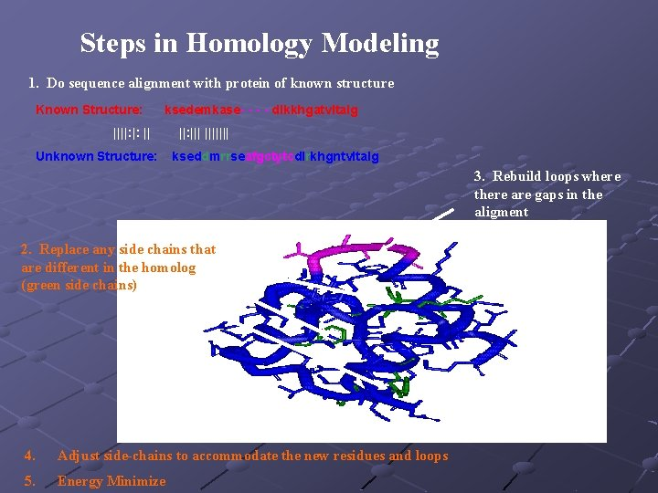 Steps in Homology Modeling 1. Do sequence alignment with protein of known structure Known
