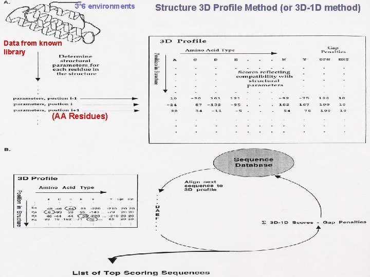 3*6 environments Data from known library (AA Residues) Structure 3 D Profile Method (or