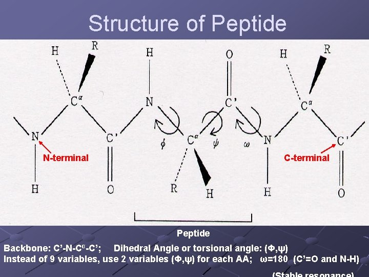 Structure of Peptide N-terminal C-terminal Peptide Backbone: C'-N-Cα-C'; Dihedral Angle or torsional angle: (Φ,