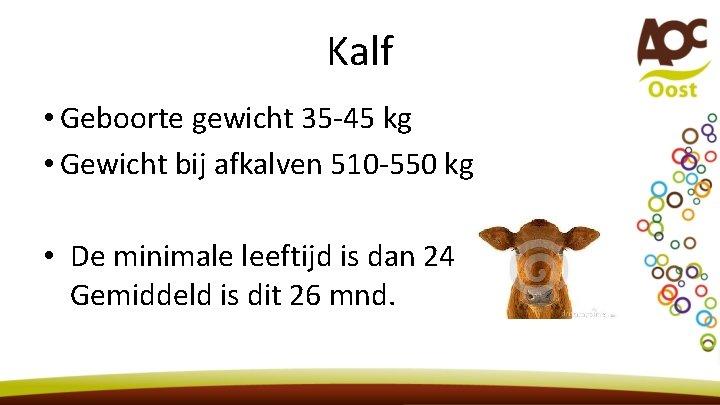 Kalf • Geboorte gewicht 35 -45 kg • Gewicht bij afkalven 510 -550 kg