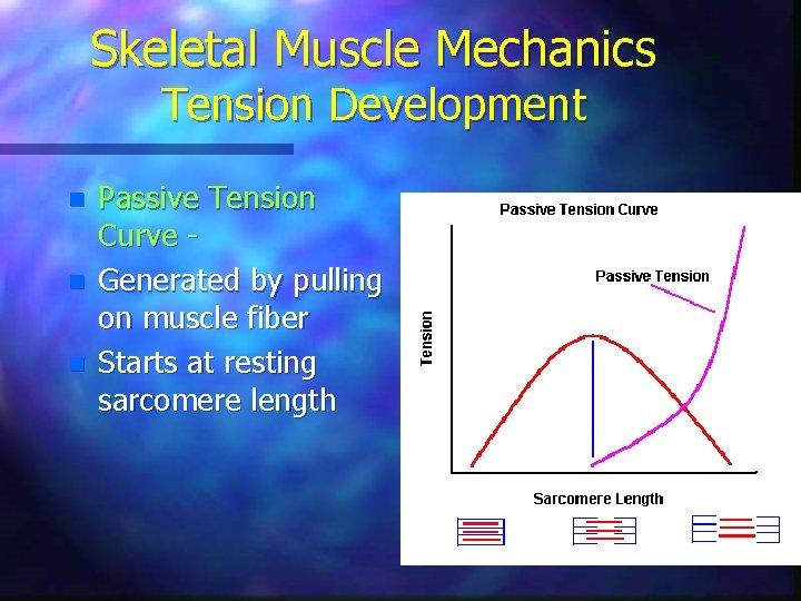 Skeletal Muscle Mechanics Tension Development n n n Passive Tension Curve Generated by pulling