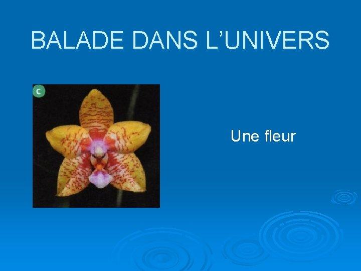 BALADE DANS L'UNIVERS Une fleur
