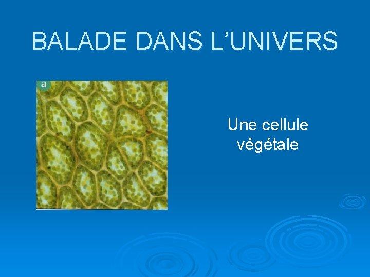 BALADE DANS L'UNIVERS Une cellule végétale