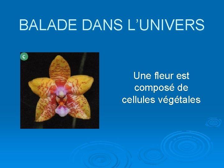 BALADE DANS L'UNIVERS Une fleur est composé de cellules végétales