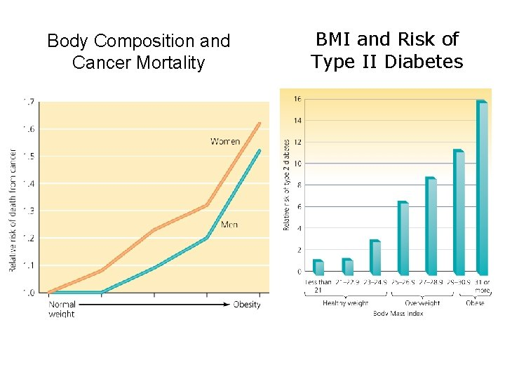 Body Composition and Cancer Mortality BMI and Risk of Type II Diabetes