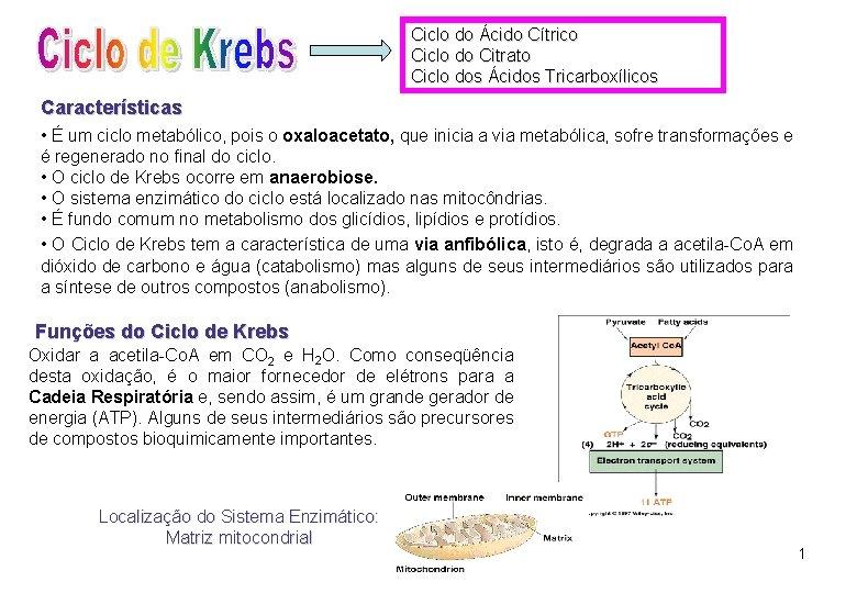 Ciclo do Ácido Cítrico Ciclo do Citrato Ciclo dos Ácidos Tricarboxílicos Características • É