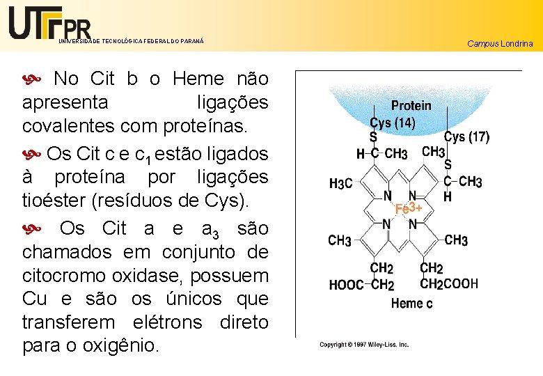 UNIVERSIDADE TECNOLÓGICA FEDERAL DO PARANÁ No Cit b o Heme não apresenta ligações covalentes