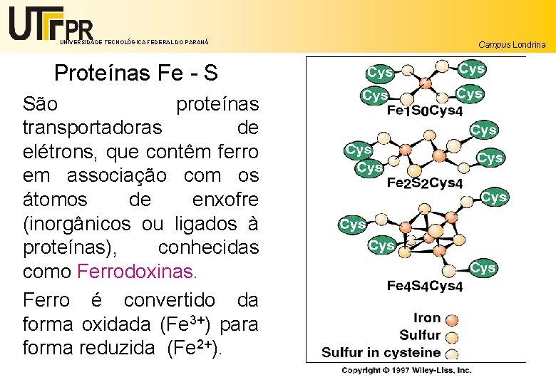 UNIVERSIDADE TECNOLÓGICA FEDERAL DO PARANÁ Campus Londrina Proteínas Fe - S São proteínas transportadoras