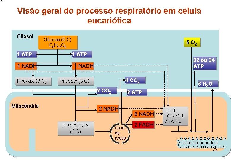 Visão geral do processo respiratório em célula eucariótica Citosol Glicose (6 C) C 6