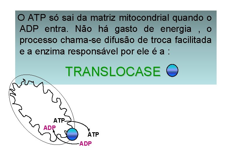 O ATP só sai da matriz mitocondrial quando o ADP entra. Não há gasto
