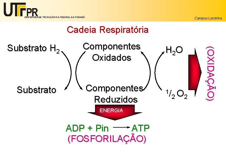 UNIVERSIDADE TECNOLÓGICA FEDERAL DO PARANÁ Campus Londrina Cadeia Respiratória Substrato Componentes Oxidados Componentes Reduzidos