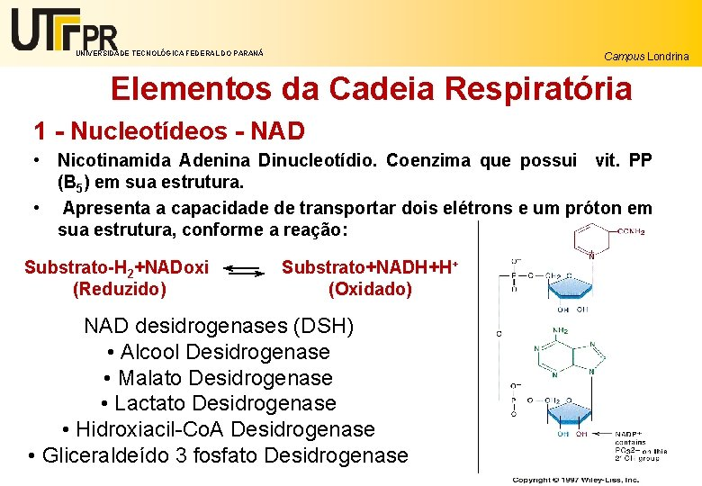 UNIVERSIDADE TECNOLÓGICA FEDERAL DO PARANÁ Campus Londrina Elementos da Cadeia Respiratória 1 - Nucleotídeos