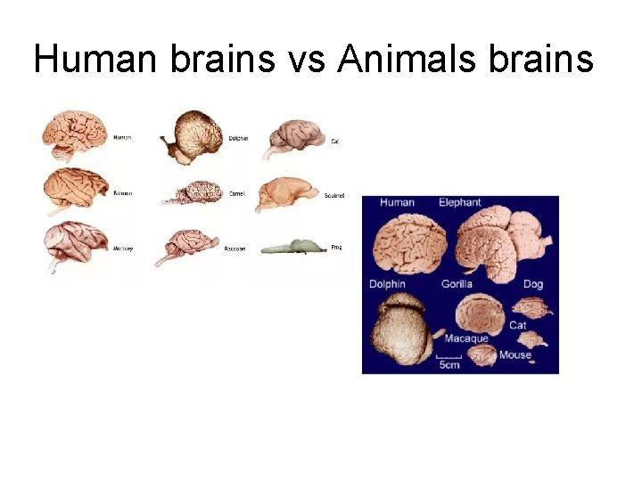 Human brains vs Animals brains