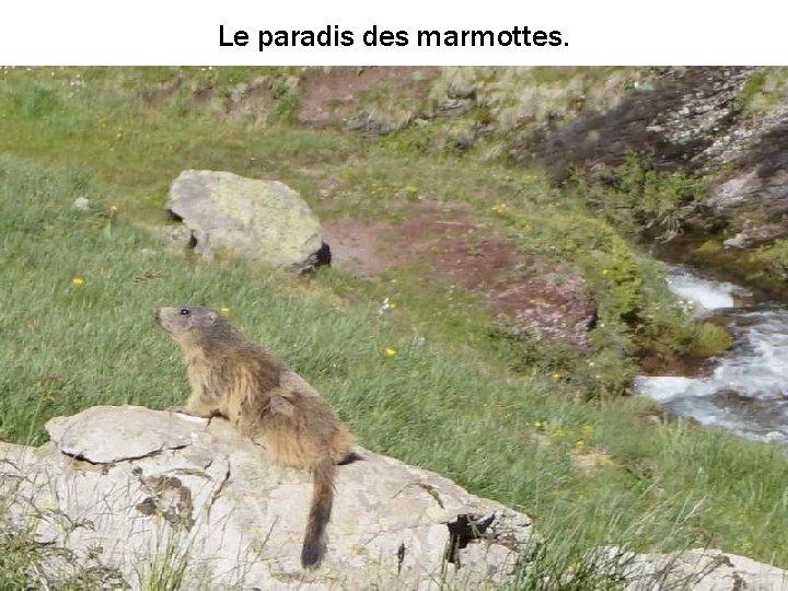 Le paradis des marmottes.
