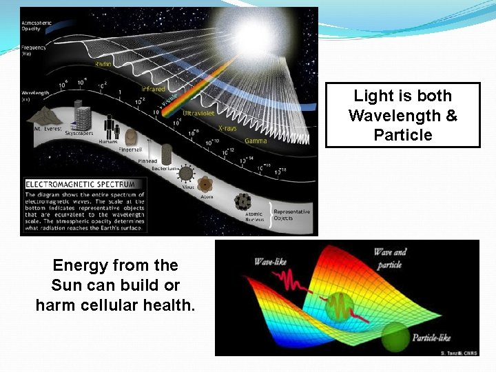 Light is both Wavelength & Particle Energy from the Sun can build or harm