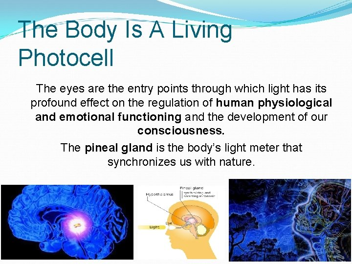 The Body Is A Living Photocell The eyes are the entry points through which