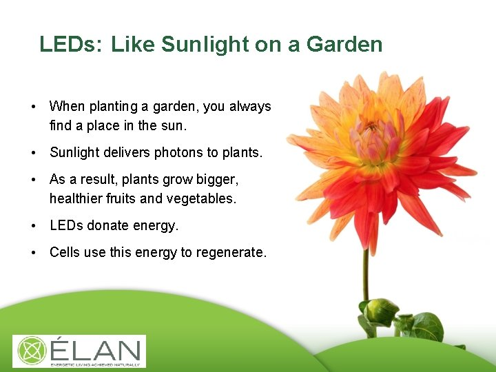 LEDs: Like Sunlight on a Garden • When planting a garden, you always find