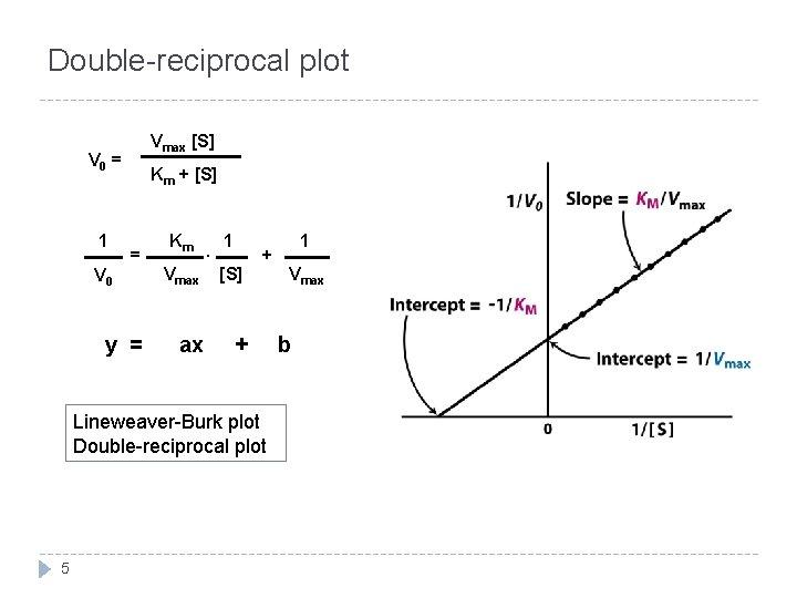 Double-reciprocal plot Vmax [S] V 0 = 1 V 0 Km + [S] =