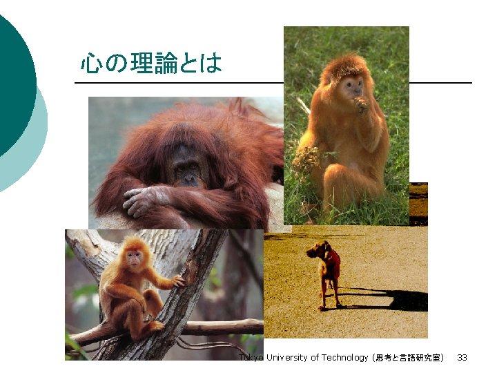 心の理論とは Tokyo University of Technology (思考と言語研究室) 33