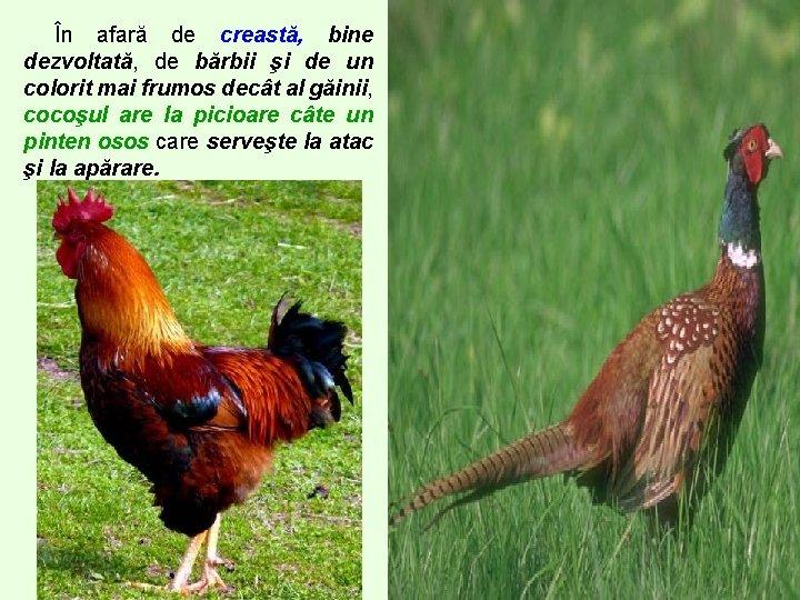 păsări de curte de vierme