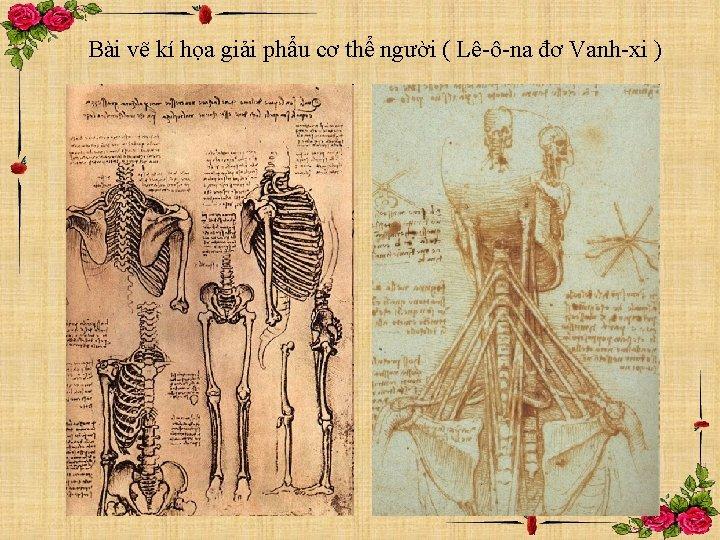Bài vẽ kí họa giải phẩu cơ thể người ( Lê-ô-na đơ Vanh-xi )