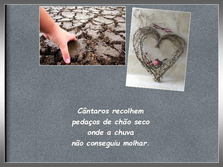 Cântaros recolhem pedaços de chão seco onde a chuva não conseguiu molhar.