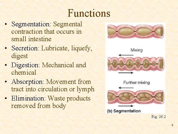 Functions • Segmentation: Segmental contraction that occurs in small intestine • Secretion: Lubricate, liquefy,