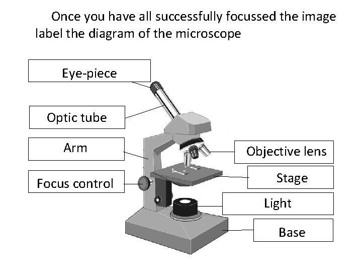 Once you have all successfully focussed the image label the diagram of the microscope