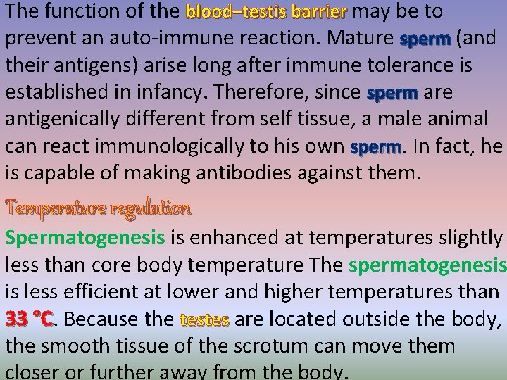 The function of the blood–testis barrier may be to prevent an auto-immune reaction. Mature