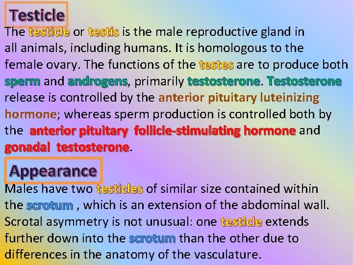 Testicle The testicle or testicle testis is the male reproductive gland in testis all