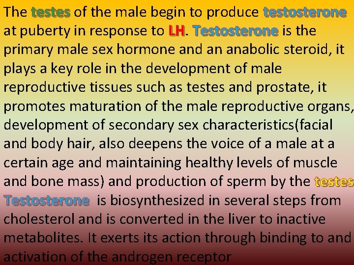 The testes of the male begin to produce testosterone at puberty in response to