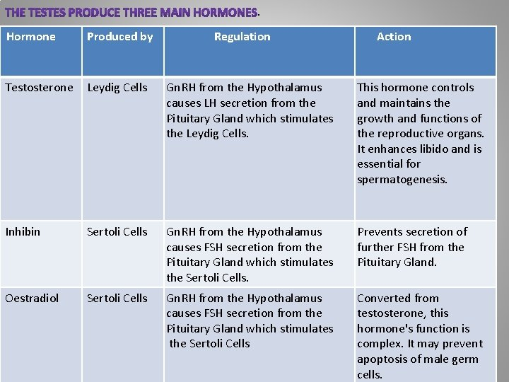 . Hormone Produced by Regulation Action Testosterone Leydig Cells Gn. RH from the Hypothalamus