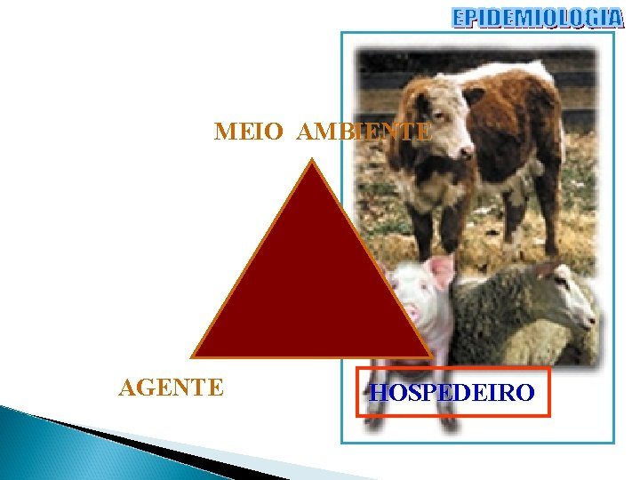 MEIO AMBIENTE AGENTE HOSPEDEIRO