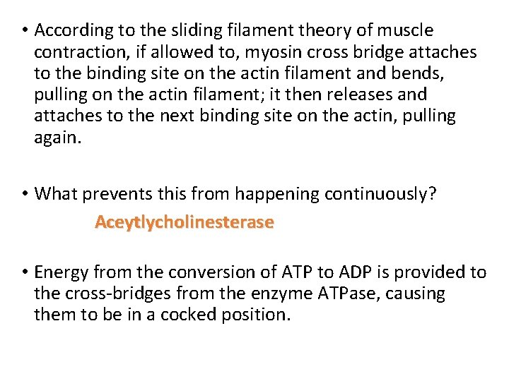 • According to the sliding filament theory of muscle contraction, if allowed to,