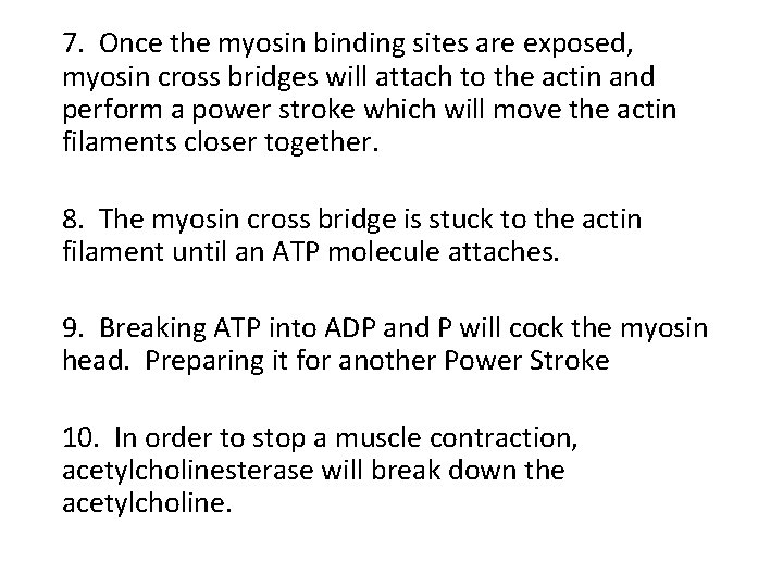 7. Once the myosin binding sites are exposed, myosin cross bridges will attach to