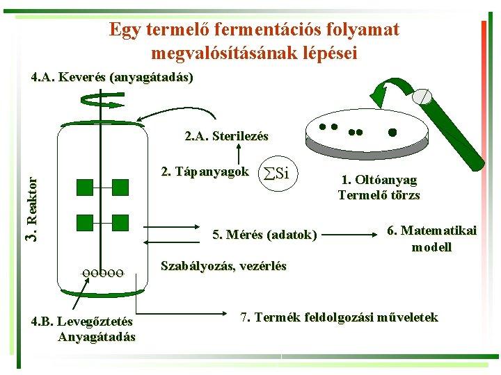 Egy termelő fermentációs folyamat megvalósításának lépései 4. A. Keverés (anyagátadás) 2. A. Sterilezés 3.