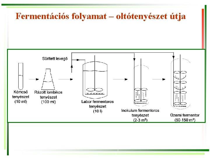 Fermentációs folyamat – oltótenyészet útja