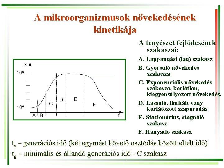 A mikroorganizmusok növekedésének kinetikája A tenyészet fejlődésének szakaszai: A. Lappangási (lag) szakasz B. Gyorsuló