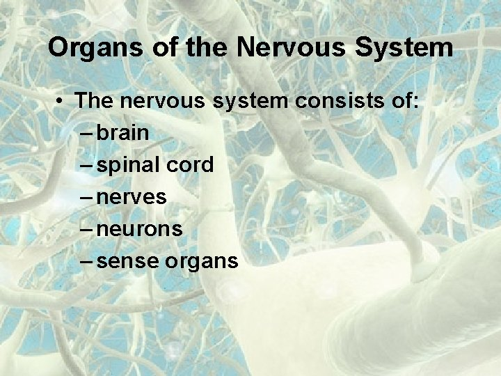 Organs of the Nervous System • The nervous system consists of: – brain –