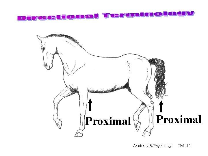 Proximal Anatomy & Physiology TM 16